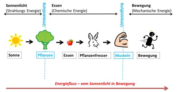Energiefluss - von Sonnenlicht in Bewegung